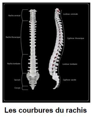 anatomie2